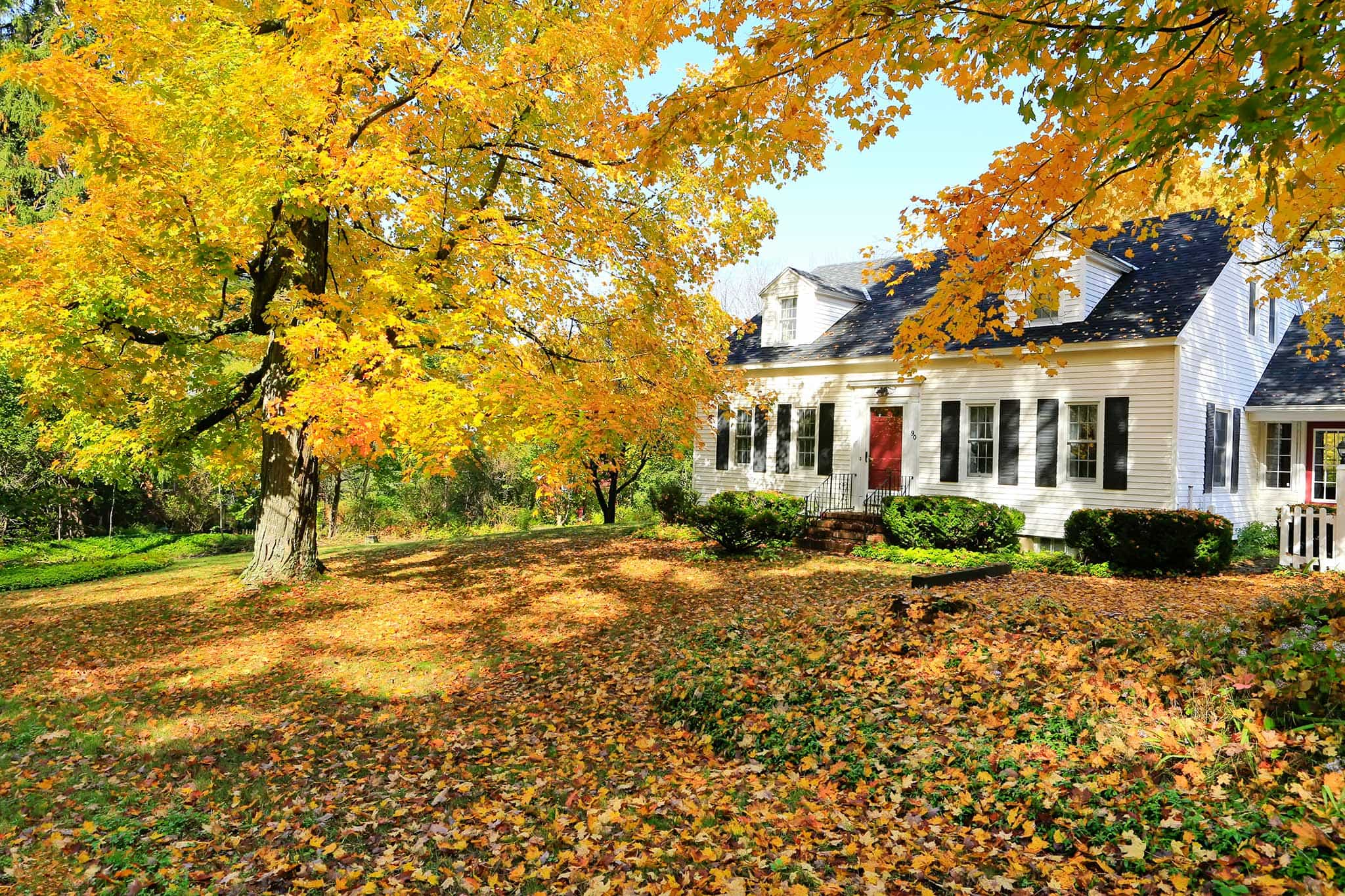 Autumn Leaves Falling in Front of House