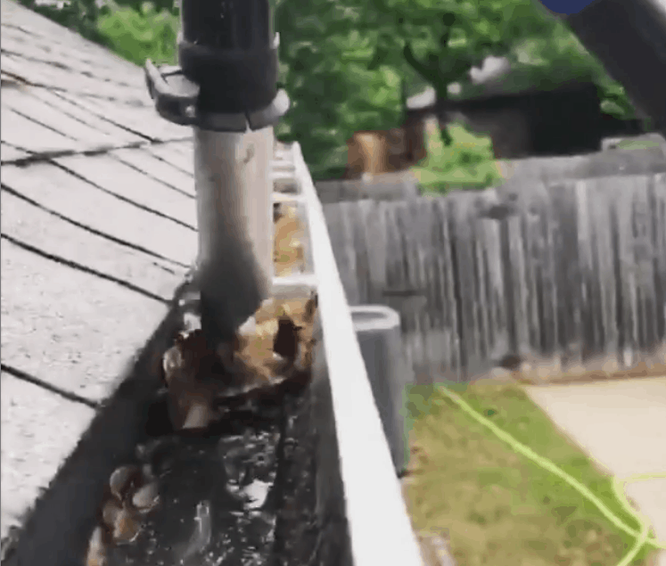 Removing Leaves from Dirty Gutters